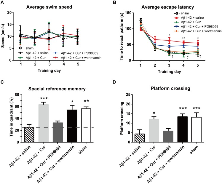 Effect of intra-hippocampal injections of ERK inhibitor or GSK3 activator on spatial learning function in the rat model of Alzheimer's disease. The ERK inhibitor PD98059 (20 μM) or GSK3 activator wortmannin (100 μM) (combined with chronic curcumin i.p. injection) was injected bilaterally into the hippocampus 30 min before the water-maze training trial. (A) Swim speed in each training trial. (B) The escape latency during the water maze training trials. (C) The time spent in the target quadrant and (D) the number of times crossing the platform in the probe task. n = 8/group. For panel B, * P