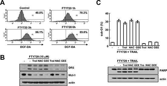 FTY720 and TRAIL-mediated apoptosis is independent of ROS signaling in Caki cells (A) Caki cells were treated with 15 μM FTY720 for the indicated time periods and loaded with H 2 DCF-DA fluorescent dye. The H 2 DCF-DA fluorescence intensity was detected by flow cytometry. (B) Caki cells were pretreated with 200 μM <t>trolox</t> (Trol), 5 mM <t>NAC,</t> and 2 mM GEE for 30 min and then stimulated with 15 μM FTY720 for 24 h. The protein expression levels of DR5, Mcl-1 and actin were determined by western blotting. The level of actin was used as a loading control. (C) Caki cells were pretreated with 200 μM trolox (Trol), 5 mM NAC, and 2 mM GEE for 30 min, and then stimulated with 15 μM FTY720 plus 50 ng/ml TRAIL for 24 h. Apoptosis was analyzed in the sub-G1 population by FACS analysis. The protein expression levels of PARP and actin were determined by western blotting. The level of actin was used as the loading control. The values in (C) represent the mean ± SD from three independent samples.