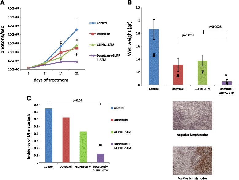 Docetaxel GLIPR1-ΔΤΜ combination treatment inhibited growth and metastasis in VCaP orthotopic xenografts. a . Nude mice bearing VCaP xenografts were treated with docetaxel, GLIPR1-ΔΤΜ, or both. Combination treatment significantly decreased the IVIS signal (photons/s) than GLIPR1-ΔΤΜ alone did ( p = 0.012) but docetaxel alone did not ( p = 0.16). b . Combination treatment decreased significantly the wet weight of VCaP xenografts rather thad GLIPR1-ΔΤΜ alone ( p = 0.0025) and docetaxel alone ( p = 0.028) did. c . Mouse lymph node tissues were stained for cytokeratin 18 to evaluate the presence of metastatic VCaP cells. The combination of docetaxel and GLIPR1-ΔΤΜ resulted in a lower incidence of LN metastasis than control treatment did ( p = 0.04), whereas single-agent treatments did not result in a significant reduction