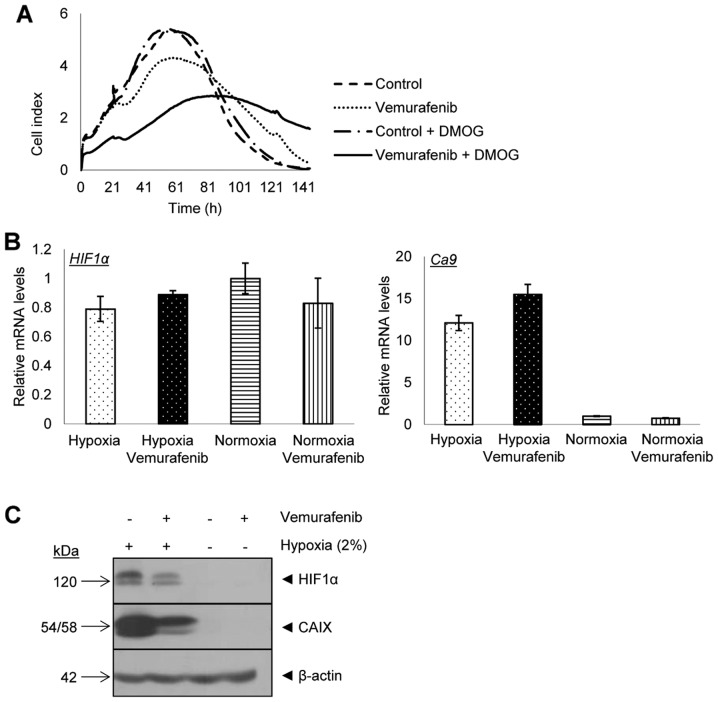 Hypoxia influences the response of vemurafenib in 518A2 melanoma cells and effects mRNA levels and protein expression of HIF1α and CAIX. (A) Time lapse measurements of the inhibitory effect of vemurafenib in normoxic and hypoxic conditions by the x-CELLigence system. (B) Real-time PCR analysis of HIF1α and CA9 mRNA levels, normalized to the internal control ( β-actin ). Error bars represent ± SD from three different experiments. (C) Expression of HIF1α and CAIX proteins in vemurafenib-treated 518A2 cells was evaluated by immunoblot analyses.