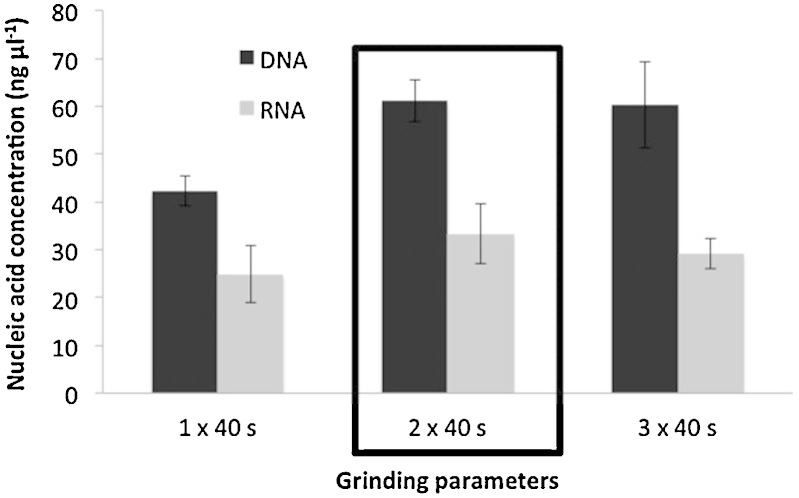 Concentrations of nucleic acids extracted (DNA and RNA) in function of the number of 40-s grinding cycles at 6 m s −1 performed by the FastPrep™ instrument. Errors bars correspond to 95% confidence intervals (alpha 0.05, 3 replicates). The conditions chosen as standard are framed.