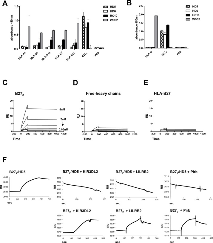 HD5 mAb is specific to B27 2 , binds to recombinant B27 2 , and blocks interaction with immunoregulatory cell receptors. (A) ELISA results showed the specificity of HD5 and HD6 to B27 2 homodimers when challenged for different recombinant HLA class I complexes (-A1,-B7,-B13,-C7,-B27, and-B27 2 ). Control HC10 and W6/32 antibodies were used as positive and negative control, respectively. (B) Direct ELISA against HLA-G and B27 2 homodimers using HD5, HD6, HC10 and W6/32 antibodies showed specificity of HD5 and HD6 to immobilized B27 2 homodimers but not to HLA-G homodimers. (C-E) Recombinant B27 2 , B27-free-heavy chain and HLA-B27 heterotrimers were immobilized into chips for kinetic characterization by SPR. C) HD5 and ligand (B27 2 ) have a K d of 0.32 nM. Immobilized free-heavy chains (D) or HLA–B27 heterotrimers (E) did not interact with HD5 and K d values were not fitted. (F) Blocking competition experiments in SPR were performed by immobilizing B27 2 to a streptavidin chip followed by injection of HD5 to form B27 2 -HD5 complexes. Injections of LILRB2, KIR3DL2 and Pirb were assessed and binding events recorded.