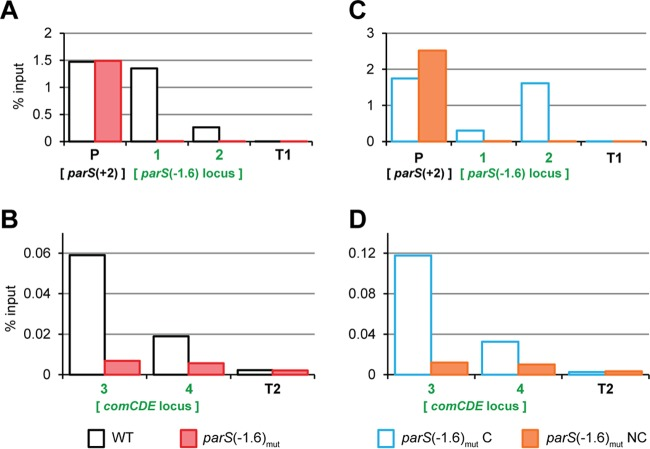 ParB spreads from parS (−1.6°) into comCDE . In the strains of interest, ParB was replaced by a <t>ParB-GFP</t> fusion. Exponentially growing cells were subjected to chromatin <t>immunoprecipitation</t> (ChIP) using anti-GFP antibodies, and the pulled-down DNA was subsequently analyzed by qPCR. (A and B) The WT (DLA42) versus the parS (−1.6°) mut strain (DLA43). (C and D) The parS (−1.6°) mut C strain (DLA77) versus the parS (−1.6°) mut NC strain (DLA80). The loci amplified by primer pairs 1, 2, 3, and 4 are shown in blue in Fig. 3A . The primer pair P amplifies another parS site [ parS (+2°)] situated +11 kb from oriC . Primer pairs T1 and T2 amplify 2 different loci in the terminus region. The graphs show pulldown efficiency (ChIP-DNA/input DNA × 100) for each primer pair. Note the different y axis scale between panels A and C and panels B and D.