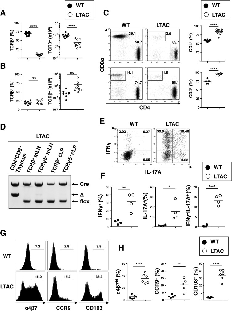 Characterization of aberrant T cells in LTAC mice. (A and B) Frequencies (left) and absolute numbers (right) of TCRβ + cells of CD45 + cells from mLNs (A) or cLP (B) of WT (n = 9–10, filled circle) and LTAC mice (n = 9–11, open circle) determined by flow cytometry analysis. Horizontal bars represent mean. (C) (Left and middle plots) Flow cytometry of CD4 + and CD8α + cell subsets in TCRβ + cells. (Right panels) Frequencies of CD4 + cell subset in TCRβ + cells. The plots are representative of at least three independent experiments. mLNs (upper) or cLP (lower) of WT (n = 7–10, filled circle) and LTAC mice (n = 8–10, open circle), determined by flow cytometry analysis. Horizontal bars represent mean. (D) Genomic DNAs from the sorted T cells in each tissue indicated were subjected to PCR amplification to detect flox (= TAK1 WT) or Δ (= TAK1 KO) allele in the TAK1 genomic locus. The DNA size difference between the flox and Δ bands is shown. Specific DNAs for Cre, loaded in each well, were also shown to prove its existence in the genome. (E) Flow cytometry of intracellular cytokines in TCRβ + CD4 + cells from cLP after culture with PMA + <t>Ionomycin</t> for 5 hours in the presence of GolgiStop. The plots are representative of four independent experiments. (F) Frequencies of each subset of cytokine-producing cells in TCRβ + CD4 + cells in cLP of WT (n = 4, filled circle) and LTAC mice (n = 4, open circle), calculated by flow cytometry analysis from (E). Horizontal bars represent mean. (G) Flow cytometry of gut homing receptors by mLN TCRβ + CD4 + cells. The histograms are representative of at least three independent experiments. (H) Frequencies of α4β7 hi , CCR9 + and CD103 + cells of TCRβ + CD4 + cells in the mLNs of WT (n ≧ 5, filled circle) and LTAC mice (n ≧ 5, open circle), determined by flow cytometry analysis from (H). Horizontal bars represent mean. In (A), (B), (C), (F) and (H), unpaired t tests were performed. Statistical significance was indicated by * P