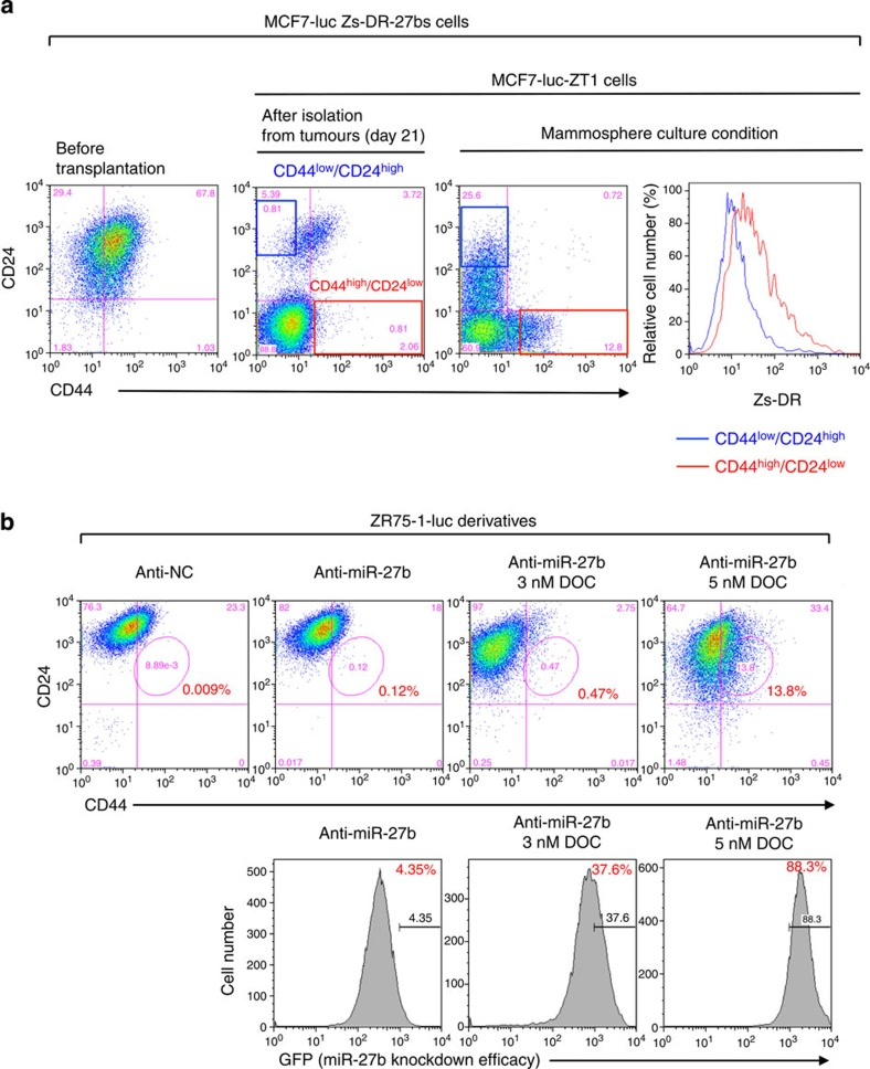Downregulation of miR-27b is associated with the generation of CD44 high /CD24 low fraction. ( a ) Flow cytometry analyses of the CD44 high /CD24 low population and Zs-DR expression in MCF7-luc Zs-DR-27bs and its tumorigenic cells (MCF7-luc-ZT1 cells) in adherent and mammosphere culture conditions. ( b ) Flow cytometry analyses of the CD44 high /CD24 low and GFP high populations of ZR75-1-luc anti-miR-27b cells treated with docetaxel (DOC).