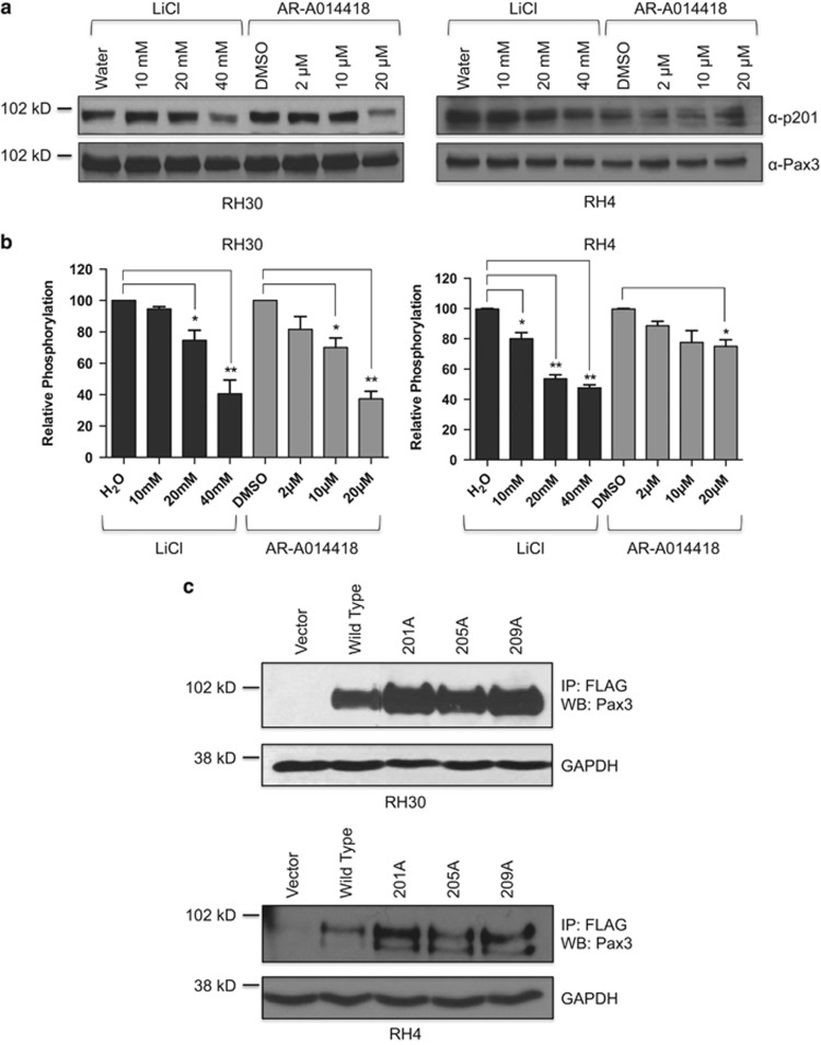 Expression and phosphorylation of endogenous PAX3-FOXO1 or PAX3-FOXO1 phosphomutants. ( a ) Total extracts were made from RH30 (left panel) or RH4 (right panel) ARMS tumor cells treated with increasing concentrations of LiCl or AR-A014418. The presence of endogenous PAX3-FOXO1 (bottom panel) or endogenous PAX3-FOXO1 phosphorylated at Ser201 (top panel) was determined by western blot analysis on 25 μg of total cell extract using an antibody specific for PAX3 or the Ser201 phospho-specific antibody. ( b ) Phospho-PAX3-FOXO1 and total PAX3-FOXO1 were quantified by densitometry after which phospho-PAX3-FOXO1 was normalized for total PAX3-FOXO1. Results are plotted as relative phosphorylation with non-treated cells being given a value of 100. Error bars represent the standard deviation from three independent determinations and P -values were computed using non-parametric two-way analyses of variance comparing each treatment condition to results with non-treated cells. (* P =0.03, ** P =0.004). ( c ) Total cell extracts were made from RH30 (top panels) or RH4 (bottom panels) cells stably transduced with vector only (vector), wild-type PAX3-FOXO1 (WT) or the indicated PAX3-FOXO1 phospho-mutant. The presence of ectopically expressed PAX3-FOXO1 was determined by immunoprecipitation-western blot analysis, as described in the Materials and Methods.