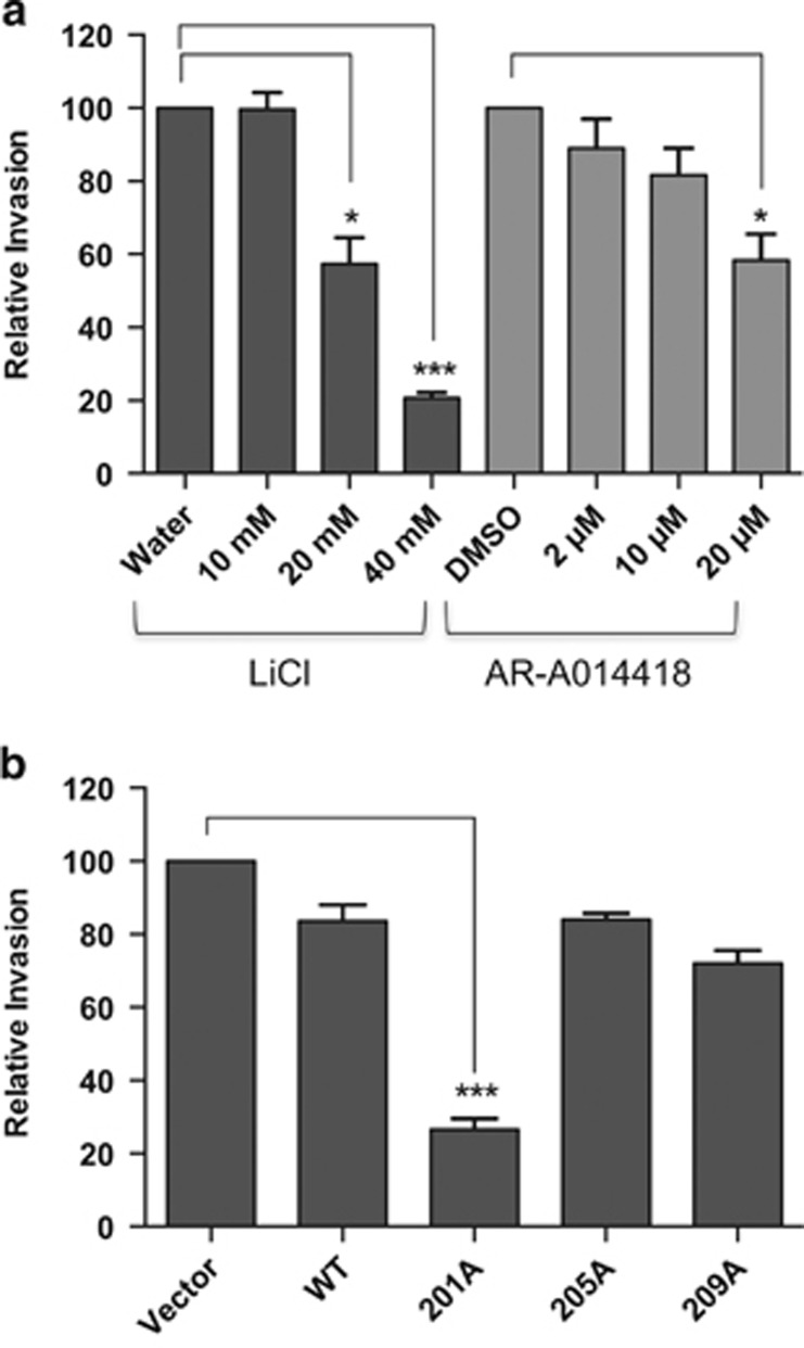 Effect of inhibiting PAX3-FOXO1 phosphorylation on ARMS tumor cell invasion. ( a ) ARMS tumor cells RH30 were treated with increasing concentrations of LiCl or AR-A014418 or ( b ) stably transduced with empty vector (vector), wild-type PAX3-FOXO1 (WT) or the indicated PAX3-FOXO1 phosphomutants, as described in the Materials and Methods. Invasion capacity was determined using the BD Biocoat Tumor Invasion system, a Matrigel-based invasion assay, as described in the Methods. Results are presented as Relative Invasion with non-treated cells ( a ) or empty vector-transduced cells ( b ) being given a relative value of 100. Error bars represent the standard deviation from three independent determinations and P -values were computed using non-parametric two-way analyses of variance comparing each treatment condition to results with non-treated cells ( a ) or to the empty vector-transduced negative control ( b ). (* P =0.02, *** P =0.0003).