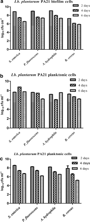 Number of viable Lactobacillus plantarum PA21 cells recovered from biofilm and planktonic cultures after contact with pathogens and food spoilage bacteria. Viable counts of Lb. plantarum PA21 biofilm cells ( a ), biofilm shed planktonic cells ( b ) and wild-type planktonic cells ( c ) were measured in co-cultures with Salmonella enterica, Pseudomonas fluorescens ATCC 13525, Aeromonas hydrophila ATCC 7965 and Bacillus cereus. Error bars indicate standard deviations of three independent experiments.