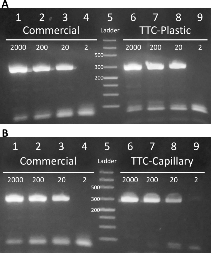 Speed and sensitivity of PCR reactions demonstrated by TTC. PCR reactions to amplify 281 bp of the nuc gene from 2000, 200, 20, or 2 copies of S . aureus genomic DNA. (A) Lanes 1 to 4: PCR products from commercial thermal cycler. Lane 5: ladder. Lanes 6 to 9: PCR products from TTC with thin-walled plastic tubes, using a protocol of 2 min hot-start, followed by 40 cycles of 11 s and 17 s denaturation and annealing/extension. The 40-cycle reactions were completed in 22 min. (B) Lanes 1 to 4: PCR products from commercial thermal cycler. Lane 5: ladder. Lanes 6 to 9: PCR products from TTC with glass capillary tubes, using a protocol of 2 min hot-start, followed by 40 cycles of 7 s and 8 s denaturation and annealing/extension. The reactions were completed in 13 min and 3 s.