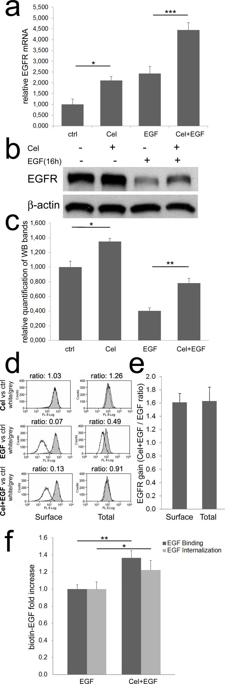 Celecoxib increases EGFR mRNA and protein expression a ) Real time PCR for EGFR. Colon TAFs were treated with Celecoxib (Cel, 10μM) for 48 hours; EGF (50ng/ml) was added as indicated during the last 16h of incubation. EGFR mRNA levels were normalized against the RP2 housekeeping gene. The mean values of three independent tests are shown. b ) A western blot for EGFR under the same condition reported for Real Time PCR. c ) The relative mean intensity of bands from six independent western blots, on three different TAFs primary cell cultures, was calculated by densitometry and plotted. d ) Flow cytometric analysis of surface and total EGFR. TAFs were treated as described above. The peaks, representing EGFR expression under Celecoxib (Cel), EGF, or Celecoxib plus EGF (Cel+EGF) treatments (white peaks), were compared to EGFR levels detected in untreated controls (grey peaks). The MFI ratio (white/grey) was calculated and reported on each panel. e ) Surface and total EGFR increase induced by Celecoxib, calculated as Cel+EGF / EGF ratio of three independent flow cytometric analyses as reported in panel d. f ) Binding and internalization of biotin-EGF in colon TAFs primed or not with Celecoxib and treated with biotin-EGF (50ng/ml) for 45 or 30min respectively. The test was run in six replicates and repeated three times.