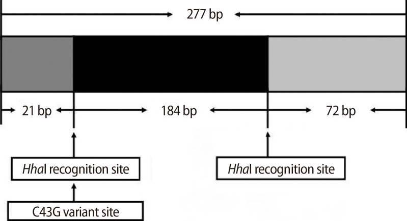 C43G variant site and the Hha I recognition site in the promoter region of the XIST gene.