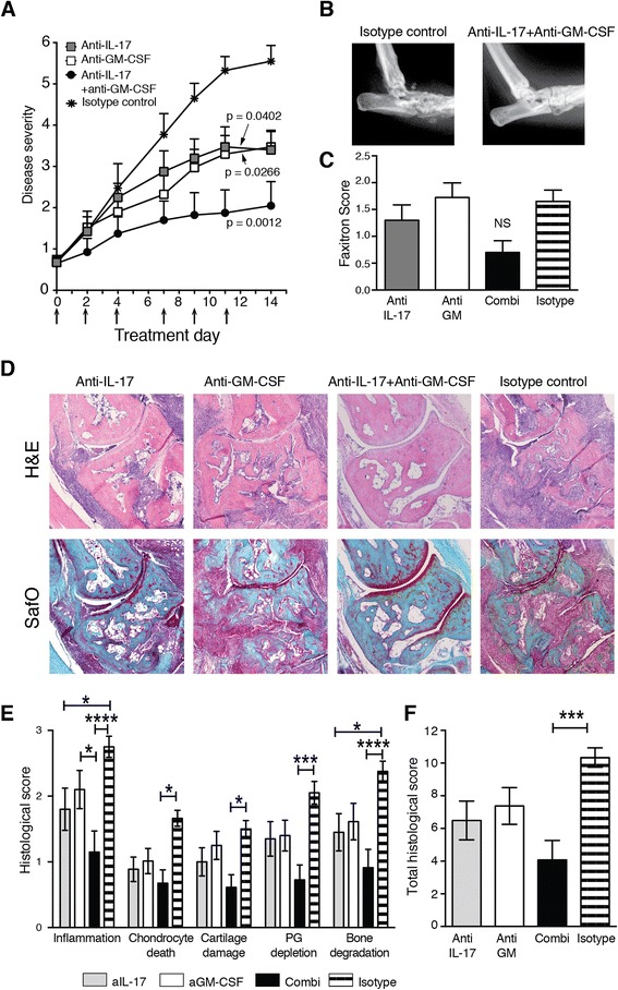 Neutralisation of interleukin (IL)-17 and granulocyte macrophage colony-stimulating factor (GM-CSF) during established collagen-induced arthritis (CIA). a Macroscopic disease scores followed over time from day 21 (day 0 of treatment). n = 10 mice/group. Arrows indicate times of antibody treatment. p values were calculated by two-way analysis of variance (ANOVA) after calculation of the area under the curve. b Endpoint X-ray analysis of ankle joints after CIA. Representative ankle joint shown for the isotype control and the anti-IL-17 + anti-GM-CSF groups. c Pooled endpoint X-ray analysis of ankle joints scored for bone damage [ n = 20 joints/group; mean ± standard error of the mean (SEM)]. d Histological analysis of ankle joints. Original magnification, ×50. e Detailed histological scores of the ankle joints after 14 days of treatment. n = 20 joints/group. f Total histological scores. n = 20 joints/group. Mean ± SEM. * p
