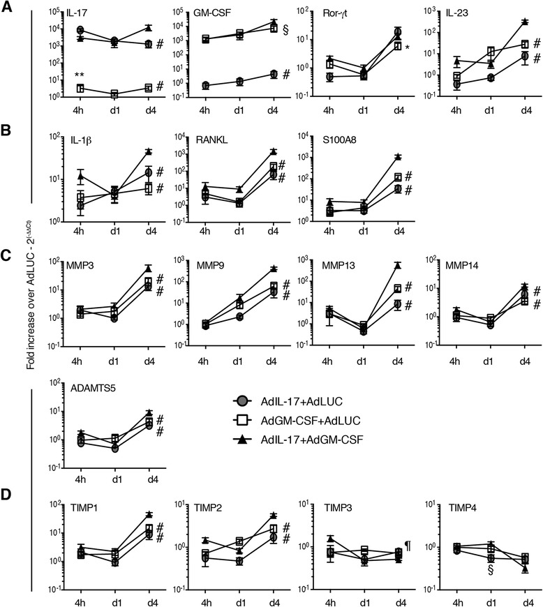 Quantitative PCR analysis of inflammatory and anti-inflammatory mediators in synovial tissue after adenoviral transfer into the knee joint. a Interleukin (IL)-17, granulocyte macrophage colony-stimulating factor (GM-CSF), RAR-related orphan receptor γt (RORγt) and IL-23 expression in synovial tissue determined at 4 h, day 1 and day 4 after adenoviral transfer. b Proinflammatory mediators IL-1β, receptor activator of nuclear factor κB ligand (RANKL) and S100A8 expression in synovial tissue determined at 4 h, day 1 and day 4 after adenoviral transfer. c Matrix metalloproteinase (MMP) expression in synovial tissue determined at 4 h, day 1 and day 4 after adenoviral transfer. d Expression of MMP inhibitors in synovial tissue determined at 4 h, day 1 and day 4 after adenoviral transfer. n = 6 joints/group. Mean ± standard error of the mean. * p