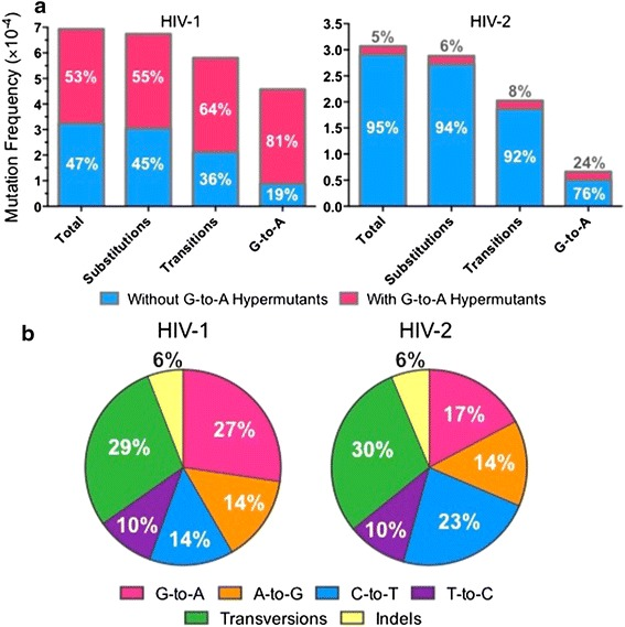 HIV-1 and HIV-2 mutation frequencies and spectra are similar in the absence of G-to-A hypermutation. a Analysis of mutation frequency in the absence of G-to-A hypermutation. HIV-1 and HIV-2 mutation frequencies were determined either including or excluding G-to-A hypermutants, with the results superimposed. The relative percentage of the total data that can be attributed (or not attributed) to G-to-A hypermutation is indicated within the bars . b Analysis of HIV-1 and HIV-2 mutation spectra in the absence of G-to-A hypermutation. HIV-1 and HIV-2 mutation spectra were examined after excluding all G-to-A hypermutants. Mutation spectra were determined by dividing the frequency of each type of mutation by the total mutation frequency, with the results expressed as a percentage. Data in both panels represent the mean of three experimental replicates.