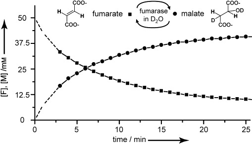 Enzymatic conversion of fumarate into malate by fumarase at 300 K monitored by integration of the conventional 1 H NMR signals of the two species. The nuclear polarizations are in thermal Boltzmann equilibrium, without resorting to DNP. A solution of fumarase (4 μL, 5.8 mg mL −1 , i.e., 10 units) was injected into a fumarate solution (500 μL, 50 m M ) at pH 8 in a buffer of 25 m M TRIS and 200 m M NaCl.