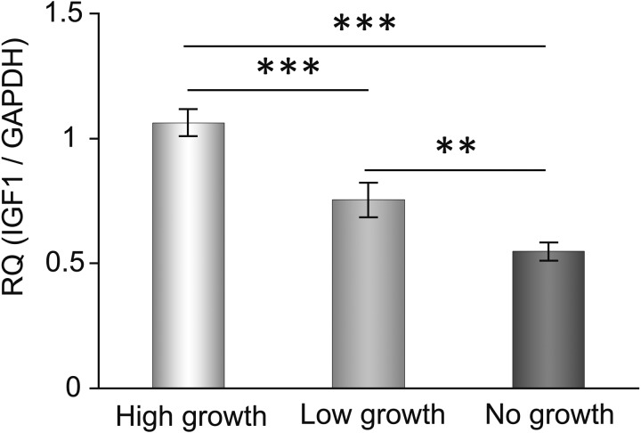 Expression of Igf1 mRNA depended on the growth rate of the cultured secondary follicles. We evaluated the expression level of Igf1 mRNA in each group on culture day 3. Statistical significance is indicated by an asterisk (**P