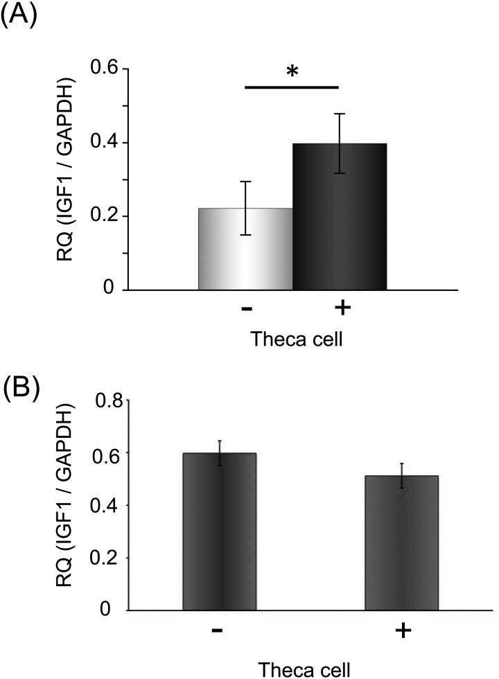 The theca cell layer increased the expression of Igf1 mRNA in the culture of secondary follicles in the no-growth group. (A) The expression level of Igf 1 mRNA of cultured secondary follicles with theca cells was higher than in those without theca cells. The total mRNA of each group was extracted from ten follicles. (B) The expression level of Igf1 mRNA of culture granulosa cells. We compared the expression level of each group, cultured granulosa cells and co-cultured granulosa cells with theca cells. Statistical significance is indicated by an asterisk (*P