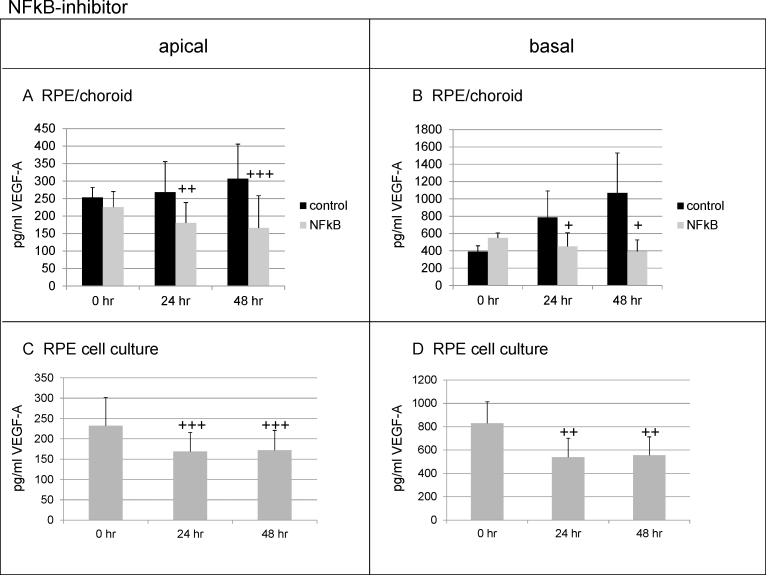 Influence of NF-κB on apical and basal VEGF-A secretion. In the RPE/choroid, the inhibition of nuclear factor-kappa B (NF-κB) significantly reduces vascular endothelial growth factor (VEGF)-A at 24 h and 48 h both on the apical ( A ) and basal sides ( B ). Similar results are obtained in primary RPE cell culture, with a significant reduction of VEGF-A secretion on the apical ( C ) and basal ( D ) sides, at 24 h and 48 h). Supernatants were collected for 24 h and were analyzed in enzyme-linked immunosorbent assay (ELISA). Significance was determined with the Student t test; + p