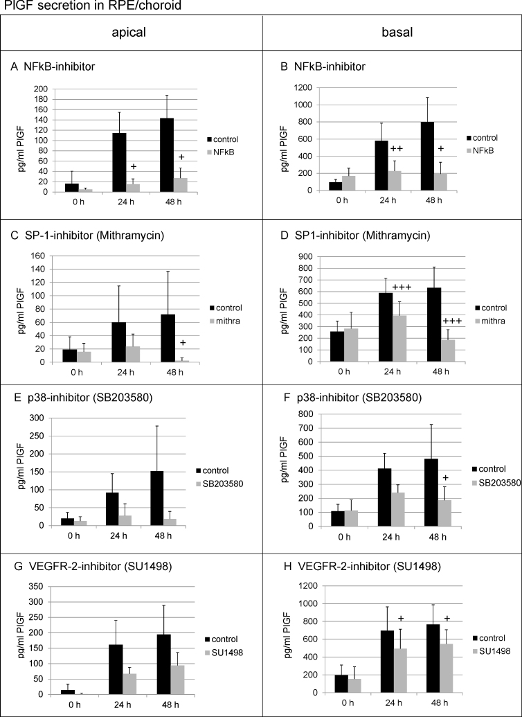 Regulation of PlGF secretion in the RPE/choroid. In general, placental growth factor (PlGF) secretion increased during cultivation. The inhibition of nuclear factor-kappa B (NF-κB) displayed a significant influence on PlGF secretion on the apical side ( A ) and on the basal side ( B ) at 24 h and at 48 h. The inhibition of SP-1 significantly reduced vascular endothelial growth factor (VEGF)-A secretion on the apical side after 48 h ( C ) and on the basal side at 24 h and at 48 h ( D ). The reduction of PlGF after p38 inhibition did not reach significance on the apical side ( E ) but did on the basal side after 48 h ( F ). The inhibition of VEGFR-2 did not significantly reduce PlGF at the apical side ( G ) but displayed significant effects on the basal side after 24 h and 48 h ( H ). Supernatants were collected for 24 h and were analyzed in enzyme-linked immunosorbent assay (ELISA). Significance was determined with the Student t test; + p