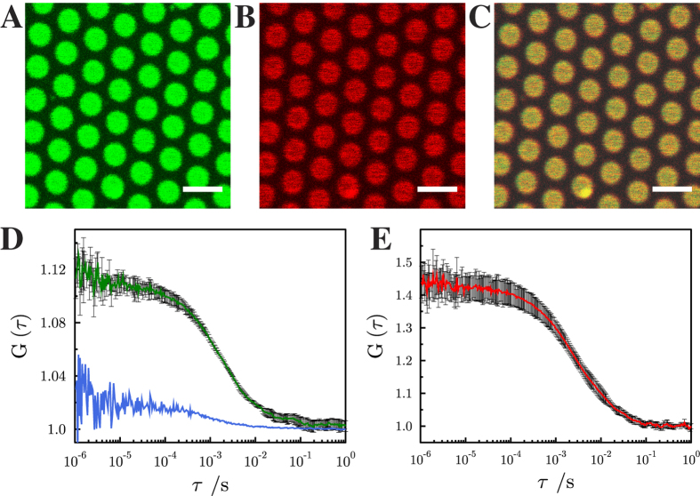 Fluorescence micrographs of pore-spanning membranes composed of DOPC/POPE/POPS/cholesterol (5:2:1:2) on a <t>6-mercapto-1-hexanol</t> functionalized gold covered porous silicon nitride surface. The images show fluorescence signals of ( A ) Atto488 DPPE, (0.01 mol%), ( B ) Atto647N-syntaxin 1 transmembrane domain (0.0055 mol%) and ( C ) an overlay of ( A ) and ( B ). Scale bars: 3 μm. Autocorrelation curves of the performed FCS measurements with excitation wavelengths of 488 nm (Atto488 DPPE, green, D ) and 633 nm (Atto647N-syntaxin 1-TMD, red, E ). The blue FCS curve in D was obtained on a gold covered pore rim showing that the fluorescence of Atto488 DPPE is significantly quenched and hence, the diffusion constant cannot be determined. Fitting eq. (4) to the autocorrelation curves provide diffusion coefficients of 7.7 ± 0.4 μm 2 /s (SD) for Atto488 DPPE and 3.4 ± 0.2 μm 2 /s (SD) for Atto647N-syntaxin 1-TMD. For Atto488-DPPE L was 200 nm, and for Atto647N-syntaxin 1A L was 250 nm. For each diffusion constant, at least 20 pore-spanning membranes from three independent reconstitutions were analyzed.