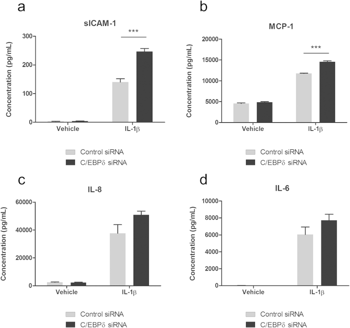 C/EBPδ knockdown modifies pericyte secretion of inflammatory mediators. Human brain pericytes were transfected with 50 nM of control or C/EBPδ siRNA for 48 hours. Following transfection cells were treated with vehicle or 10 ng/mL IL-1β for 24 hours and conditioned media collected. Concentration of sICAM-1 ( a ), MCP-1 ( b ), IL-8 ( c ) and IL-6 ( d ) in media was determined using a multiplex cytometric bead array. Data represent mean ± SEM (n = 4). *** = p