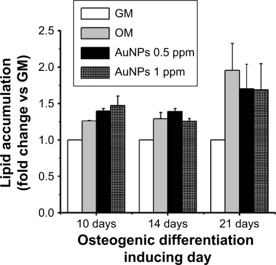 Effect of chitosan-conjugated AuNPs on adipogenic differentiation. Notes: Lipid accumulation of hADMSCs treated with chitosan-conjugated AuNPs after 10, 14, and 21 days of culturing. Results are mean ± SE of the triplicate experiments. Abbreviations: AuNPs, gold nanoparticles; GM, growth medium; hADMSCs, human adipose-derived mesenchymal stem cells; OM, osteogenic-inducing medium; SE, standard error.