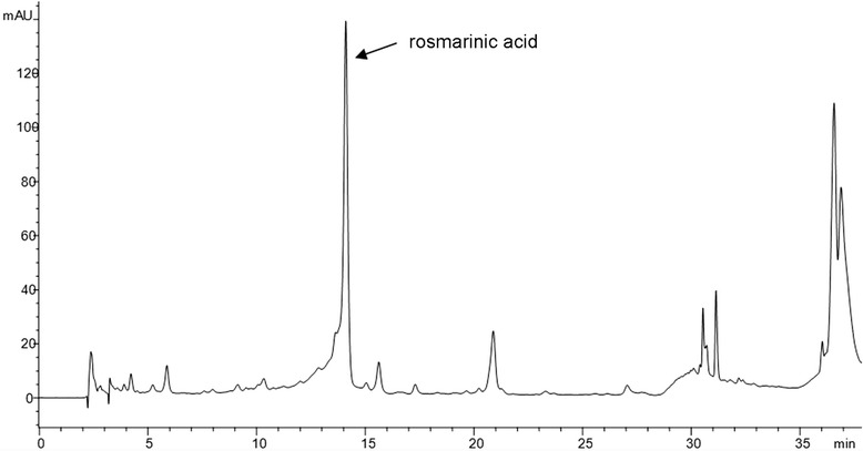 <t>HPLC</t> chromatogram of Micromeria <t>croatica</t> ethanolic extract recorded at 330 nm. The main compound was identified as rosmarinic acid (Rt = 14.1 min)