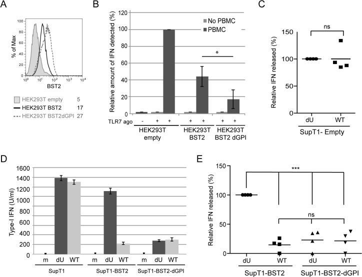 Effect of a BST2 GPI anchor mutant on Vpu-mediated control of IFN-I production by pDCs. (A-B) HEK293T cells were transfected with either an empty plasmid or plasmids expressing BST2 or BST2-dGPI 48 h prior to co-culture with PBMCs. (A) Surface expression of BST2 was evaluated 48 h post transfection by flow cytometry in controls cells (shaded grey histogram), as well as in cell expressing BST2 (solid black histogram), or BST2-dGPI (dashed grey histogram). Mean fluorescence intensity (MFI) values are indicated for each sample (B) After 6 h of co-culture, samples were untreated or treated with Imiquimod (TLR7 agonist) and levels of bioactive IFN-I in supernatants were measured 18 h later. The amount of IFN-I released by PBMCs in contact with HEK293T cells transfected with the empty plasmid in presence of the TLR 7 agonist was set at 100% (n = 4). As a control, transfected HEK293T cells were treated with TLR7 agonist without PBMCs. (C) Percentage of IFN-I released after co-culture of infected SupT1-Empty with PBMCs normalized to the value obtained with dU HIV-infected SuptT1 cells (100%) (n = 4). (D) A representative example of absolute levels of IFN-I produced after co-culture of mock or infected-SupT1,-SupT1-BST2 or-SupT1-BST2-dGPI cells with PBMCs is shown. (E) Relative percentages of IFN-I produced after co-culture of infected-SupT1-BST2 or SupT1-BST2-dGPI cells with PBMCs are shown. The amount of IFN-I released by PBMCs in contact with dU HIV-infected SupT1-BST2 cells was set at 100% (n = 4). Two-tailed paired t -test was used in B and C (* p
