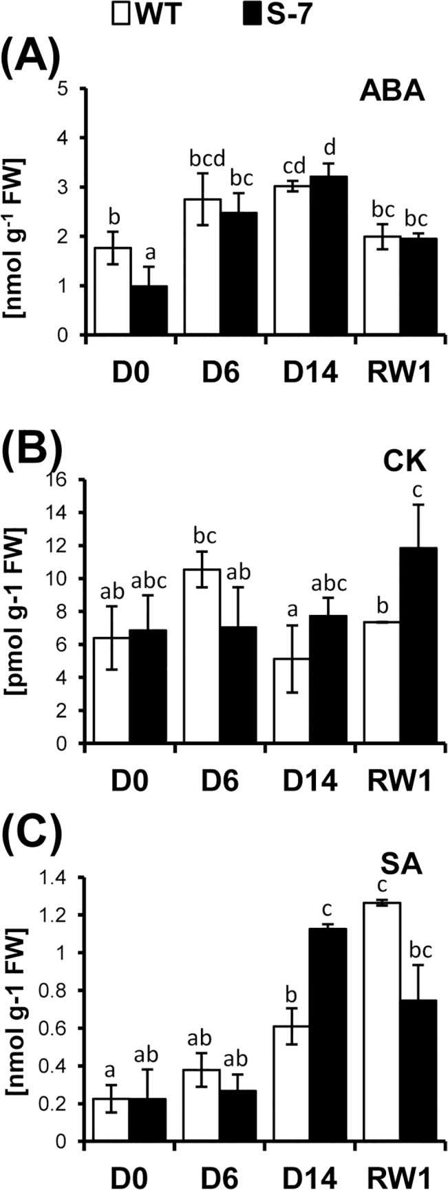 Accumulation of stress-related hormones during drought. WT (white bars) and transgenic line S-7 (black bars) were subjected to 14-day drought as described in Fig 2 . The level of (A) absicisic acid ABA; (B) sum of active cytokinins, CK; (C) salicylic acid, SA were determined at D0, D6, D14 and RW1. Samples (0.5g of fresh leaf tissue without the midrib) were collected from the first fully developed, undamaged leaf from the top of plant at 4 hours after turning the light. Labeled internal standards were added to the leaf samples before homogenization. Hormones were then extracted, purified using a <t>SPE-C18</t> column and separated on a reverse phase-cation exchange SPE column. Hormones were quantified using a hybrid triple quadruple/linear ion trap mass spectrometer. The level of ABA and SA is expressed as nmol g -1 of fresh weight; the levels of cytokinins–as pmol g -1 of fresh weight. Results are means ±SE (n = 3). Homogenic groups are determined by Tukey HSD (Honestly Significant Differences) test. The same letters designate values belong to the same homogenic group (p