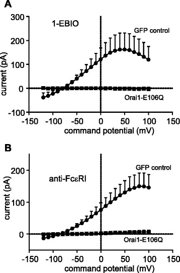FcεRI- and 1-EBIO-dependent HLMC K Ca 3.1 currents are inhibited by expression of an Orai1-E106Q dominant-negative mutant. Transduction of HLMCs with an Orai1-E106Q dominant-negative mutant ablated ( a ) 1-EBIO- dependent and ( b ) FcεRI-dependent K Ca 3.1 currents. For clarity, data are presented as the subtracted net activation-dependent currents (activation minus baseline) for each condition, expressed as mean ± SEM