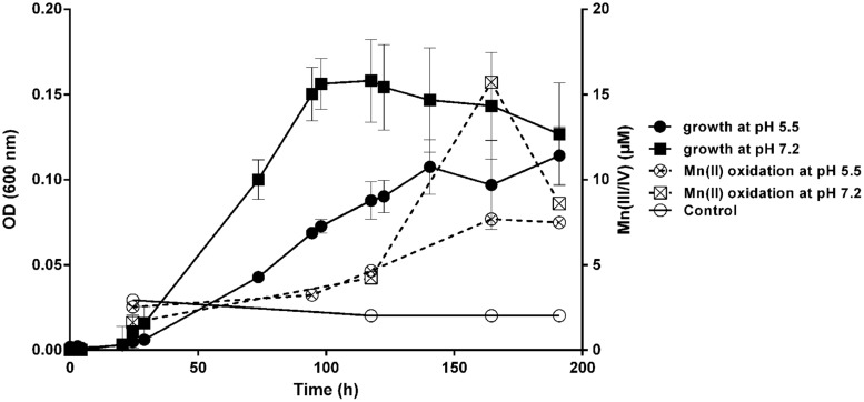 Mn(II) oxidation and growth of T-G1 at different pH values. Growth (OD 600 ) and Mn(II) oxidation at pH 5.5 and pH 7.2. The data for the Mn(II) oxidation control at pH 7.2 overlapped with that at pH 5.5, therefore, only the data at pH 5.5 is shown. Error bars represent SD.