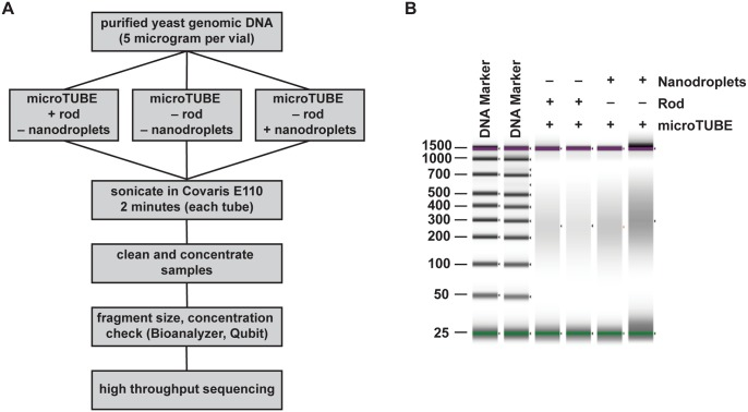 Nanodroplet-mediated DNA fragmentation compared to a commercial method. (A) Flow chart outlining method for comparing DNA fragmentation methods. (B) False gel picture from Agilent <t>D1000</t> <t>ScreenTape</t> system showing DNA fragment size distribution in base pairs for samples fragmented in the Covaris E110 sonicator. Purple bars indicate the upper (1,500 bp) molecular weight marker and green bars indicate the lower (25 bp) molecular weight marker in each lane.
