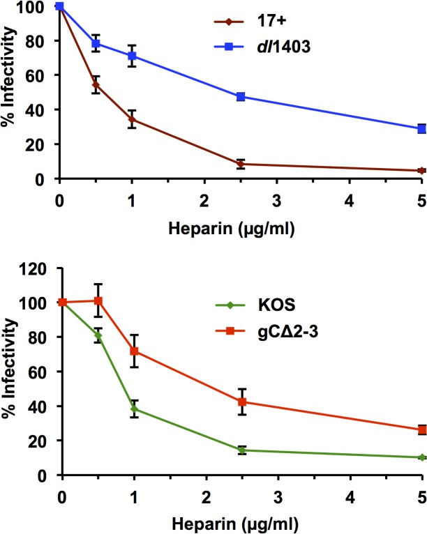 Resistance of HSV-1 dl 1403 to inhibition by heparin. HSV-1 17+, dl 1403, KOS, or gC∆2–3 (100 PFU per well) was added to Vero cells at 4˚C for 1 hr in the presence of 0 to 5 μg/ml heparin as indicated. Cultures were washed thrice with PBS, and then incubated at 37˚C for 24 hr. Plaque formation was detected by immunoperoxidase staining. Plaque formation in the untreated sample was set to 100%. The data are means of quadruplicate determinations with the standard error of the mean. Results are representative of three independent experiments.