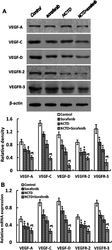 NCTD inhibits the expression of VEGF-A, VEGF-C, VEGF-D, VEGFR-2 and VEGFR-3 proteins/mRNAs of the in-situ colonic xenografts in vivo. a Western-blotting: the expression of VEGF-A, VEGF-C, VEGF-D, VEGFR-2 and VEGFR-3 proteins in NCTD, Sorafenib, or NCTD + Sorafenib group was significantly downregulated as compared to control group (* P