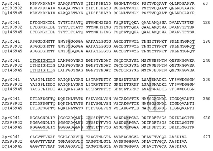 Multiple sequence alignment of deduced protease <t>AprX</t> from P. fluorescens 041 (this study), P. fluorescens A506 (Genbank accession number AY298902 ), and P. fluorescens strain F (Genbank accession number DQ146945 ). The differences in amino acid residues are indicated by gray shading, and the catalytic domain of neutral zinc metalloprotease is underlined. Boxed residues are thought to participate in Calcium binding.
