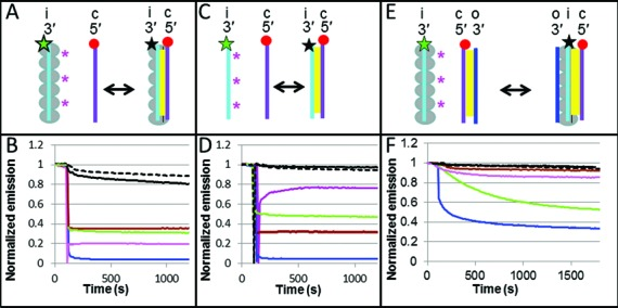 Experiments on 20 nt sequences using the emission of the donor in a FRET pair to study the homology sensitivity of ssDNA binding to the presynaptic filament, free ssDNA annealing and strand exchange. ( A ) Schematic of the binding of free ssDNA with the initiating strand in the presynaptic filament bringing fluorophores in close proximity. The large gray circles indicate RecA molecules. The yellow regions indicate Watson–Crick pairing. The red circle and the star correspond, respectively, to the positions of the rhodamine (acceptor) and fluorescein (donor) FRET partners. The star is green when the fluorescein is emitting and black when it is quenched by the nearby rhodamine. The magenta asterisks indicate the position of the mismatches for a partially matched case. ( B ) Emission of the fluorescein donor versus time for the perfectly matched (blue), mis4 (magenta), 3i (green), 1+2 (brown), pcDNA3 (solid black) and het (dashed black). ( C ) Annealing of free labeled ssDNA molecules without RecA protein. ( D ) Same as (B), except it is for the case shown schematically in panel (C). ( E ) Schematic of the strand exchange experiment. The outgoing, initiating and complementary strands are labeled o, i and c, respectively. ( F ) Fluorescence intensity as a function of time for the strand exchange experiment illustrated in panel (E) and for the same sequences shown in panel (B).