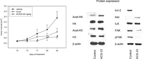 Effect of ACS33 on prostate cancer xenografts. PC3 xenografts were established in male athymic mice. Animals in the treatment arm received 20 mg/kg bw ACS33 each day, or 2 mg cisplatin/kg/day (cis-pt). *Indicates significant difference to the control animals. Western blot analysis of H3 and H4 histone expression (total and acetylated), of bcl-2, bax, ILK and Fak (total and activated) was carried out on the tissue specimens using specific antibodies as listed in materials and methods (Fig. 6 , right). β-actin served as the internal control. One representative western blot data of three are shown.