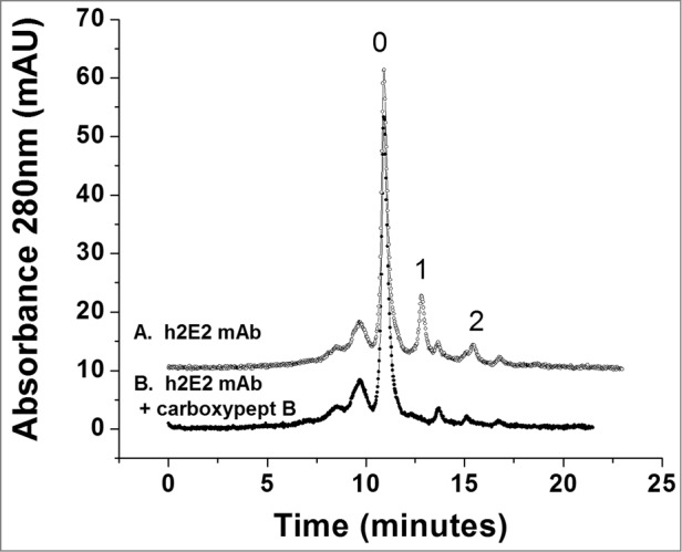"High performance strong cation exchange chromatography of the h2E2 antibody before and after treatment with carboxypeptidase B. 100 μg of h2E2 antibody was injected, and eluted with a gradient of NaCl in MES buffer. Note the disappearance of peaks 1 and 2 after removal of the C-terminal lysine residues. These peaks represent h2E2 antibody molecules containing 1 or 2 lysine residues on the C-termini of the 2 heavy chains in the antibody (which, after removal of lysine by carboxypeptidase elute with the main peak labeled '0"" eluting at approximately 11 minutes)."