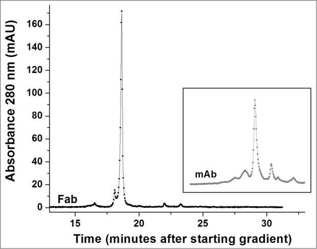 High performance strong cation exchange chromatography of the Fab fragment derived from the h2E2 antibody. 100 μg purified Fab fragment was injected, and eluted with a gradient of NaCl in MES buffer at 22°C. Note the relative lack of charge heterogeneity compared to the intact h2E2 antibody ( Fig. 4 and the inset), indicating much of the charge heterogeneity resides in the Fc portion of the h2E2 antibody. For comparative purposes, the position and pattern of the intact antibody on the same column using the same buffers and gradient is shown in the inset (offset in the y-direction for clarity).