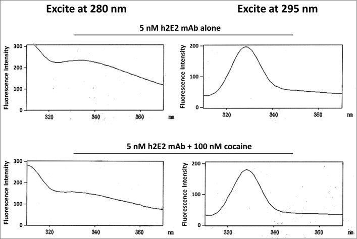 Intrinsic h2E2 antibody tryptophan and tyrosine fluorescence quenching by cocaine binding. Shown are emission spectra of 5 nM h2E2 antibody both before and after addition of 100 nM cocaine, with excitation at either 280 nm (tyrosine and tryptophan) or 295 nm (tryptophan). Note the decrease in emission (quenching) caused by cocaine, but little if any change in the emission maximum (near 330 nm in both cases).