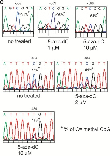 Analysis of DNA methylation by methylation-sensitive restriction enzyme assay. (A) – The proximal MOR promoter, its flanking regions, and the positions of the CpG sites are shown. Methylation-specific PCR products (Full-A) were amplified using MS-647 and MAS-353 primers (Table 1 ) after sodium bisulphite treatment for genomic DNA. The restriction enzyme Hpy188I (Hp1) recognizes and cuts amplified PCR products that contain the retained C residue at the –569 position. For the –182 and –178/–170 sites, MS-376 and MAS-79 primers were used for the PCR amplification (Full-B) and digested with either Hp1 or HpyCH4IV (Hp4), respectively. The predicted sizes of the methylation-specific PCR products and the digested fragments are shown below. (B) – PCR products (Full-A and Full-B fragments) from NS20Y cells treated with the indicated concentrations of 5-aza-dC, as well as from undifferentiated P19 cells, fully differentiated P19 cells (AP4d), and mouse brain (MB). Intact PCR product (no RE) was used as a control. The graphs to the right of each gel show the percentage of methylation, determined by comparing the intensity of the bands cut by Hp1 or Hp4 relative to the intensity of the unmethylated ( i.e. upper, uncut bands). Column numbers in graph indicate the corresponding gel lanes. Data for the graphs are the mean ± S.E.M. from three independent experiments. *Indicates P