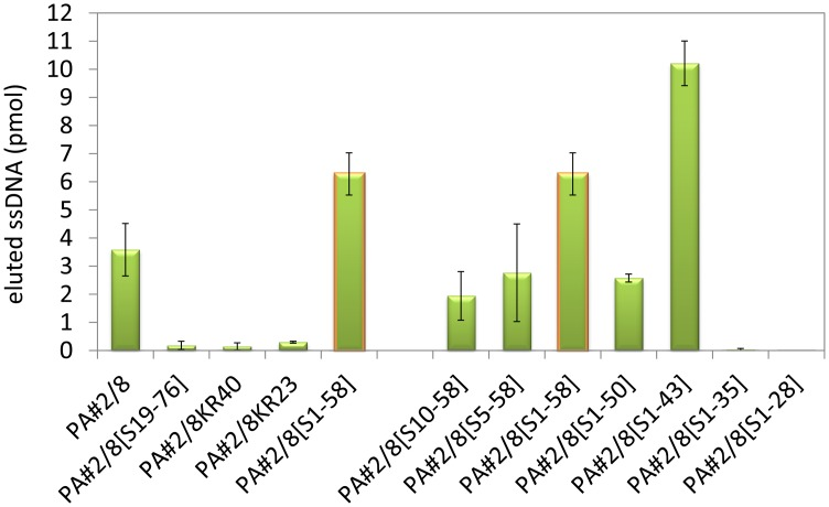 Binding abilities of the truncated aptamer variants in comparison to the full-length aptamer PA#2/8 to Protein A. Bead-based binding assays were performed using Protein A/Strep-MB and fluorescein-labeled ssDNA. Target-bound aptamers were eluted and quantified.
