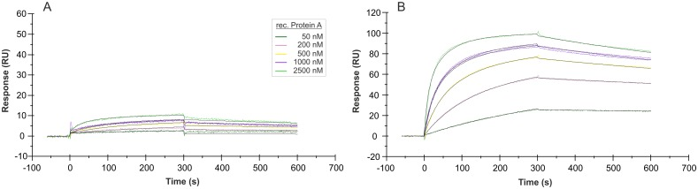 SPR interaction analyses concerning the immobilization orientation of aptamer PA#2/8. Biacore X100 / sensor chip CAP / ligand: 5'-biotinylated aptamer PA#2/8 (A) or 3'-biotinylated aptamer PA#2/8 (B) / analyte: recombinant Protein A with different concentrations (50–2500 nM, 1000 nM in duplicate). Double-referenced sensorgrams are shown (reference surface modified with unselected SELEX library, buffer injection). Black lines represent the fit to bivalent analyte binding model.