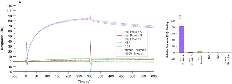 SPR interaction analyses regarding the specificity of aptamer PA#2/8. Biacore X100 / sensor chip CAP / ligand: 3'-biotinylated aptamer PA#2/8 with immobilization level of 1000–1200 RU / analyte: different proteins with a concentration of 1000 nM each (recombinant Protein A, Protein G, and Protein L in triplicate; HSA, BSA, and human Thrombin in duplicate). Double-referenced sensorgrams (A) are shown (reference surface modified with unselected SELEX library, buffer injection). Bar graph (B) of binding levels of the different proteins from the end of the association phases (after 300 s of injection) is presented.