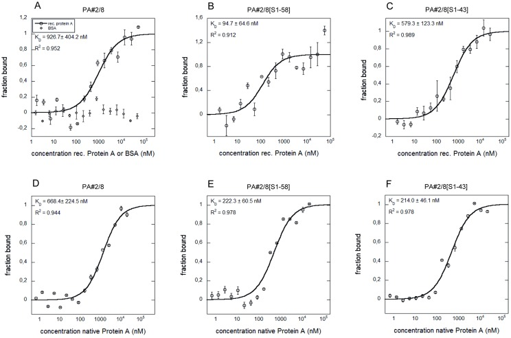 Aptamer—Protein A interactions analyzed by MST. Binding curves for the interactions of fluorescently labeled aptamer PA#2/8 (A, D) or its truncated variants PA#2/8[S1-58] (B, E) and PA#2/8[S1-43] (C, F) with recombinant or native Protein A are shown. BSA was used as negative control (A). The aptamer concentration was kept constant at 50 nM for each interaction analysis and the protein was titrated in the range from 1.69 to 55,555 nM of recombinant Protein A and from 0.33 to 10,820 nM of native Protein A, respectively. The binding data were fitted, and the dissociation constants ( K D ) were calculated.