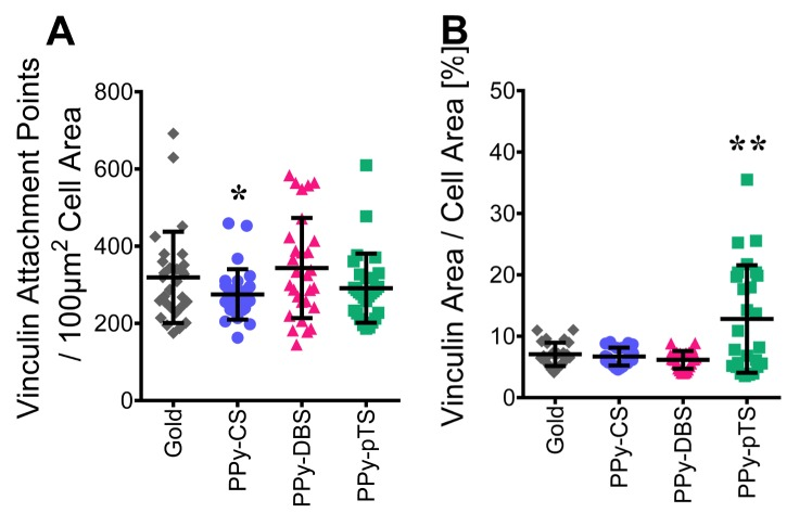 Focal adhesion and attachment. Vinculin attachment points / 100 μm 2 cell area [A] and percentage share of vinculin area / cell area [B] was analyzed with Fiji ImageJ. The value represents mean ± standard deviation (n = 27). *p