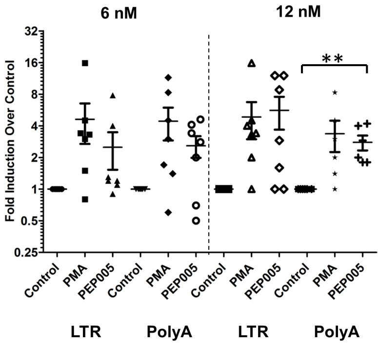 PEP005 induces full-length HIV transcripts in primary CD4+ T cells from HIV infected individuals on suppressive ART. Primary CD4+ T cells were isolated from peripheral blood of HIV infected individuals on suppressive ART and treated with 6 or 12 nM PEP005, 200 ng/ml PMA plus 2 μM Ionomycin, or DMSO for 6 hours. Induction of HIV transcription was measured using RT-qPCR for the 5' LTR region or Poly A region of the virus. **, p