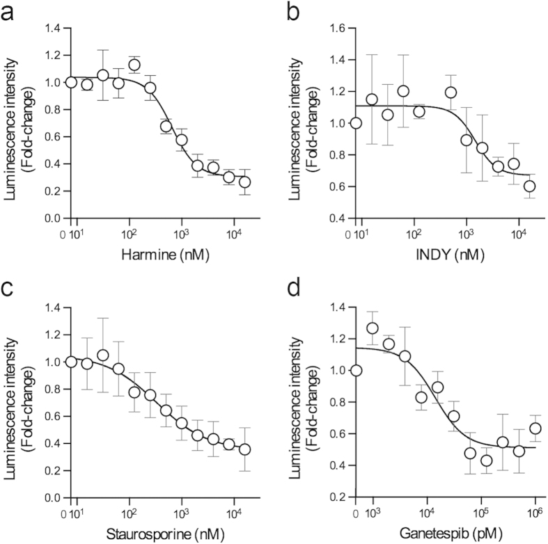 DYRK1A inhibitors and a HSP90 inhibitor antagonize the interaction of CDC37-nanoKAZ with a DYRK1A mutant. ( a-d ) 293T cells stably expressing CDC37-nanoKAZ were transiently transfected with an expression vector for 3xFLAG-DYRK1A (Y319F/Y321F) and then treated with the indicated concentrations of harmine ( a ), INDY ( b ), staurosporine ( c ), and ganetespib ( d ). Luminescence intensities are shown as fold-changes relative to that at 0 nM, normalized to the amount of 3xFLAG-DYRK1A (Y319F/Y321F) bound on a 96-well plate. Points are means ± SD (n = 3). Representative dose-response curves with Hill slopes are shown.