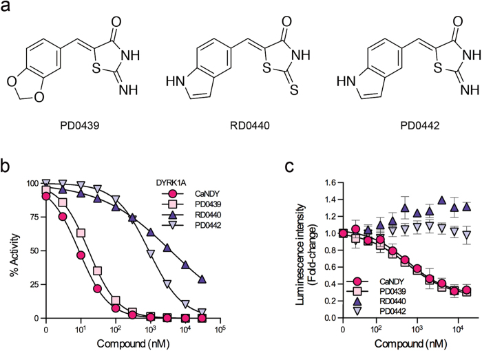 Structural requirement of CaNDY. ( a ) Structures of PD0439, RD0440, and PD0442. ( b ) In vitro kinase assay using these small molecules, as performed in Fig. 5d . ( c ) CDC37-nanoKAZ binding assay using these small molecules, as performed in Fig. 5c .