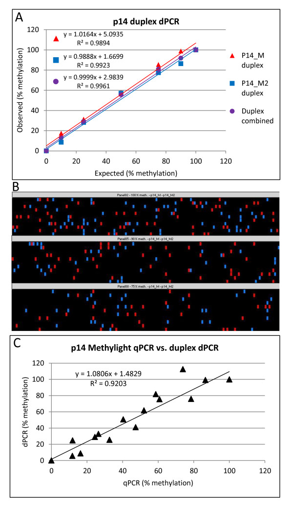 MethyLight duplex <t>dPCR.</t> (A) Duplex p14 dPCR assay showing data for p14_M and p14_M2 assays separately and with estimated targets for both assays combined. (B) dPCR heatmap showing distribution of p14_M (red) and p14_M2 (blue) positive chambers in a duplex reaction showing three example panels of a dPCR plate. (C) Correlation between MethyLight <t>qPCR</t> vs . duplex dPCR (estimated targets for both assays combined). All correlations were significant at p